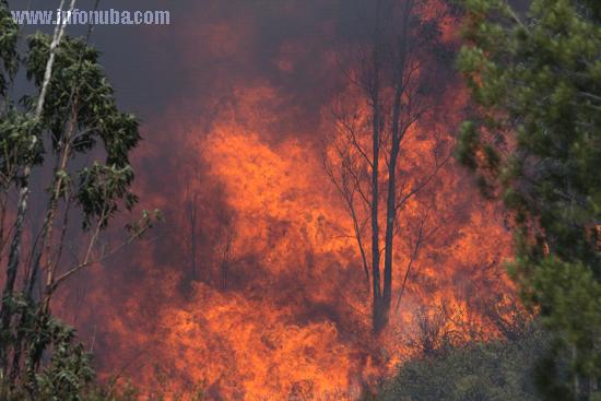 La llamas devoran el monte en el trémino municipal de Almonaster