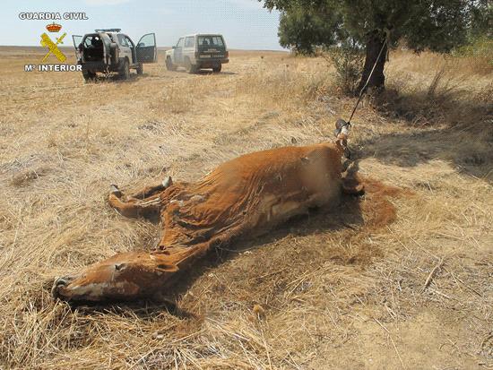 Imagen del cádaver del animal