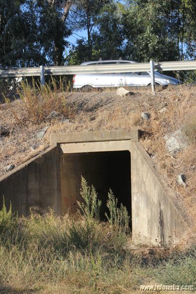 Una imagen de la entrada del túnel peatonal invadido por las hierbas