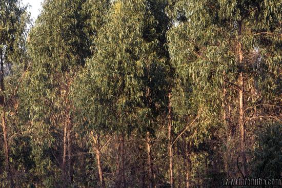 Uno de los terrenos en los que desarrolla la empresa ENCE sus explotaciones forestales