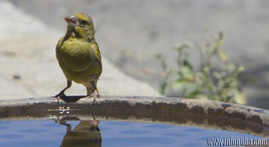 Un ave reposa en una fuente.