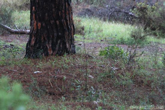 Zona donde se encontró el cadáver del animal.