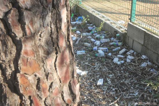Imagen de los bricks junto al entorno de la arboleda.