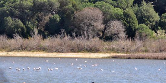 Imagen de la Laguna de El Portil.