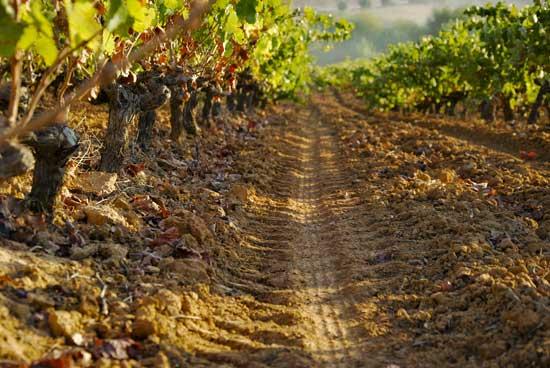 Imagen de la ruta del vino en la provincia onubense.