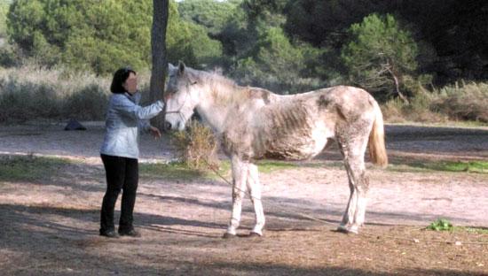 Un caballo con deficiencias en su alimentación