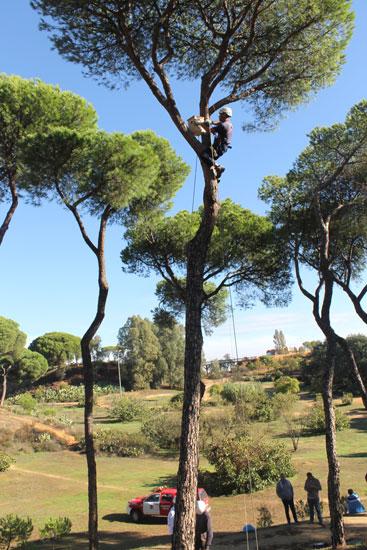 Colocación de cajas nido en el Parque Moret.