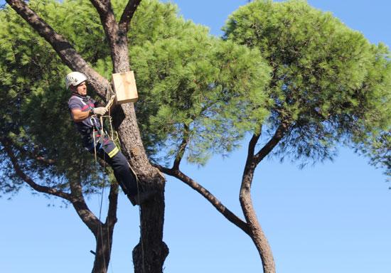 Un bombero coloca una de las cajas nido.