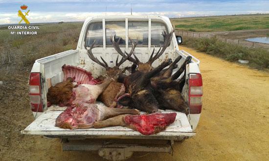 Imagen de las piezas de caza mayor intervenidas.
