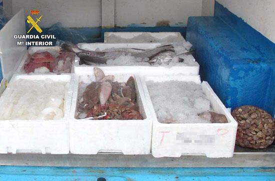 Imagen del pescado intervenido.