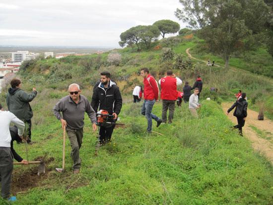 Imagen de la reforestación.