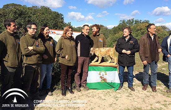 La presidenta de la Junta, Susana Díaz, asistió en la jornada de ayer en Coto del Rey (Almonte, Huelva) a la suelta de un ejemplar de lince ibérico procedente de Sierra Morena.
