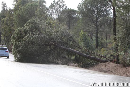 Imagen del árbol.