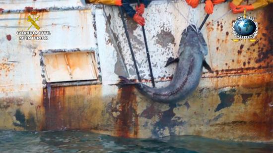Imagen de la pesca ilegal.