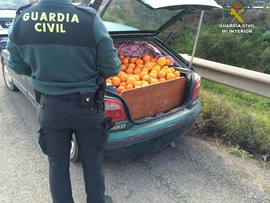 Un agente de la Guardia Civil observa las naranjas intervenidas.