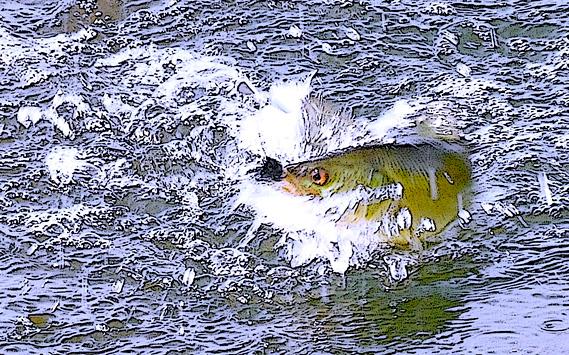 Imagen de un pez picando en un anzuelo.