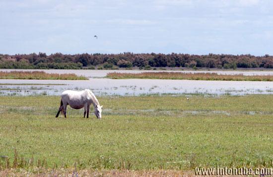 Imagen del Parque Nacional de Doñana.