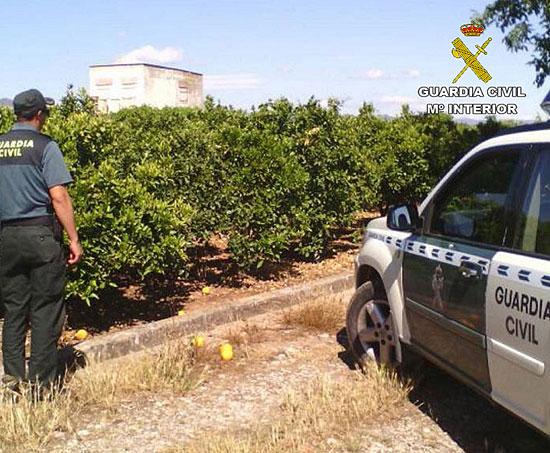 Un agente de la Guardia Civil realiza labores de vigilancia en una finca agrícola.