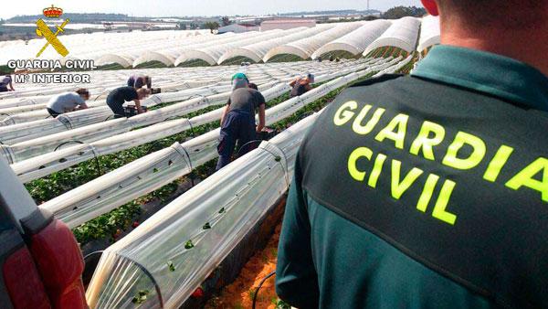 Un agente de la Guardia Civil durante labores de vigilancia en una finca agrícola.