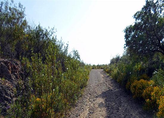 Camino que une Alosno con la estación del Cobujón.