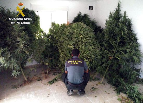 Un agente de la Guardia Civil junto a las plantas incautadas.