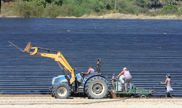 Preparación del campo para el cultivo de fresas en Huelva.