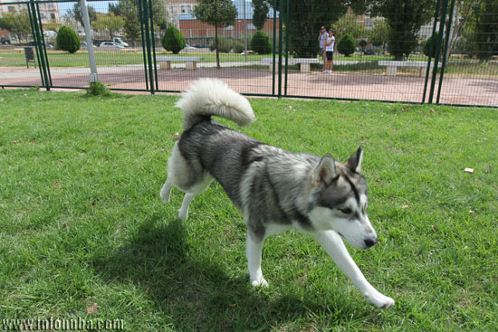 Un perro juega en la zona canina del parque.