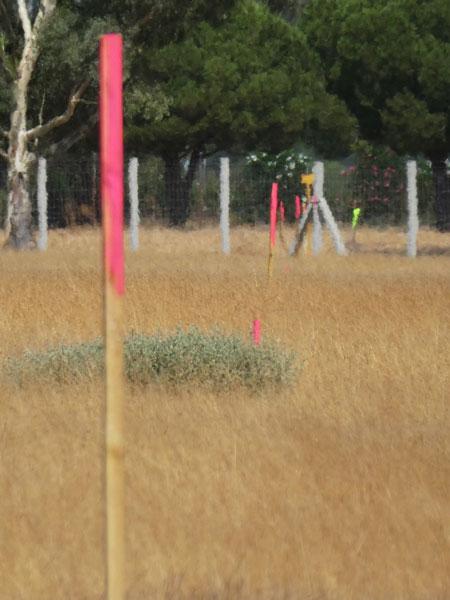 Palos marcados en rosa en los terrenos de la Junta por donde pasa la tubería.