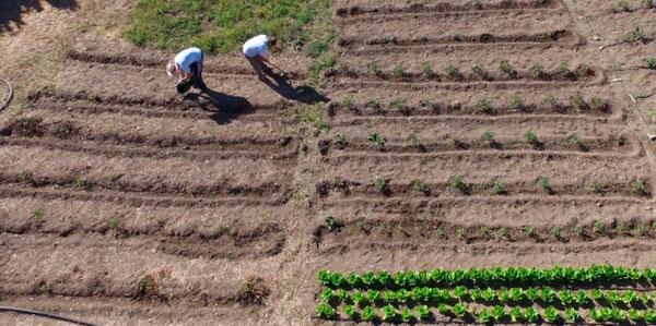 Dos personas realizan labores de labranza en un huerto de la sierra de Huelva.