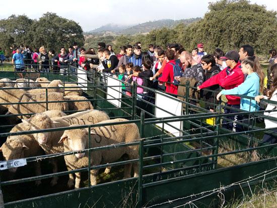 Los jóvenes observan el ganado.