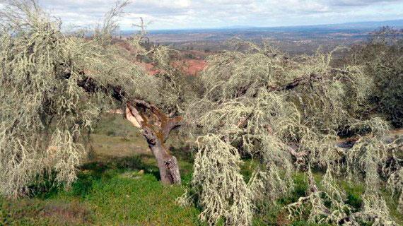 Imagen de una Dehesa en la provincia de Huelva.