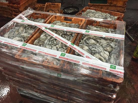 Imagen de cajas de pulpo decomisadas.