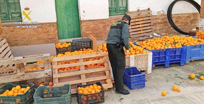 Un agente muestra los kilos de naranjas intervenidas.