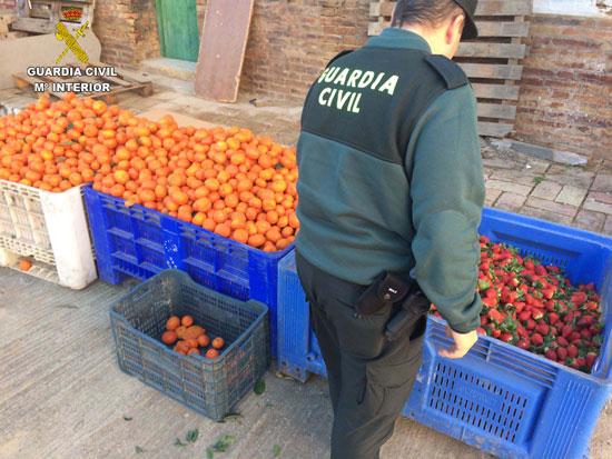 Un agente realiza comprobaciones en la fruta sustraída.