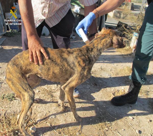 Imagen de uno de los animales afectados.
