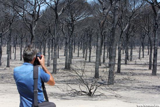 Incendio declarado este pasado verano en el Paraje de Las Peñuelas (Moguer).