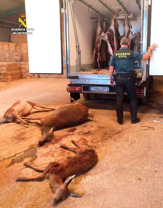 Imagen de un agente y animales fallecidos.