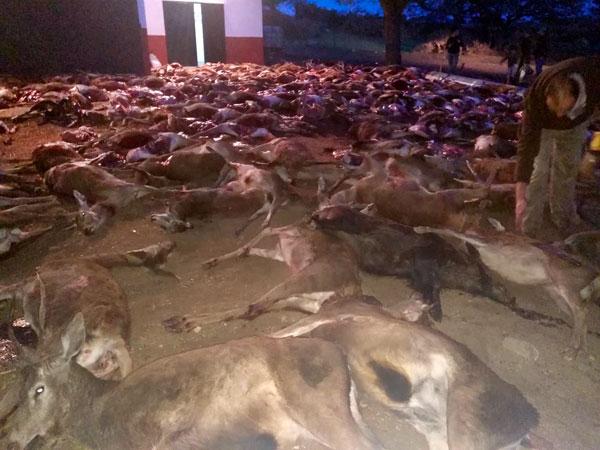 Imagen de los animales fallecidos.