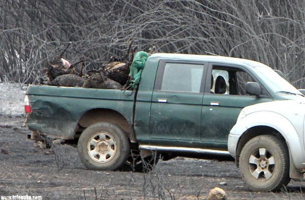 """Imagen de animales fallecidos el pasado mes de septiembre en el incendio de """"La Granada de Riotinto""""."""