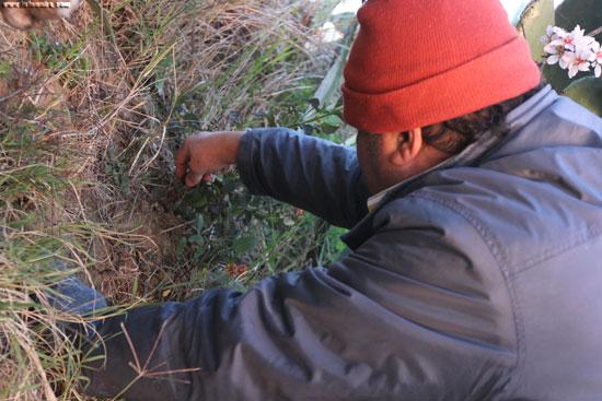 Jacobo, por iniciativa propia, planta un rosal en el Parque Moret.