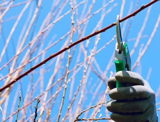 Csif denuncia el impago de la n mina de enero a los for Jardineria huelva
