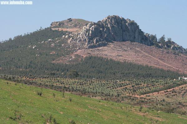 Imagen de zona forestal en la Puebla de Guzmán.