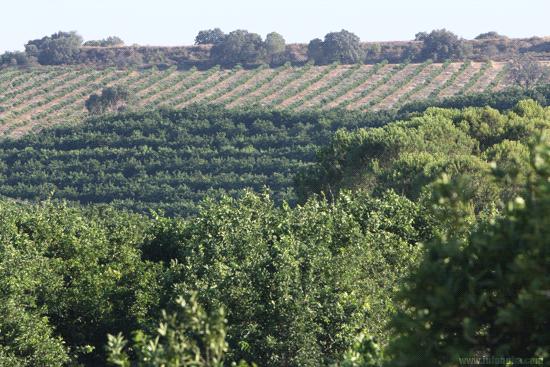 Imagen de una explotación agrícola en la provincia de Huelva