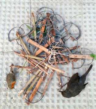 Imagen de las trampas y los pájaros fallecidos.